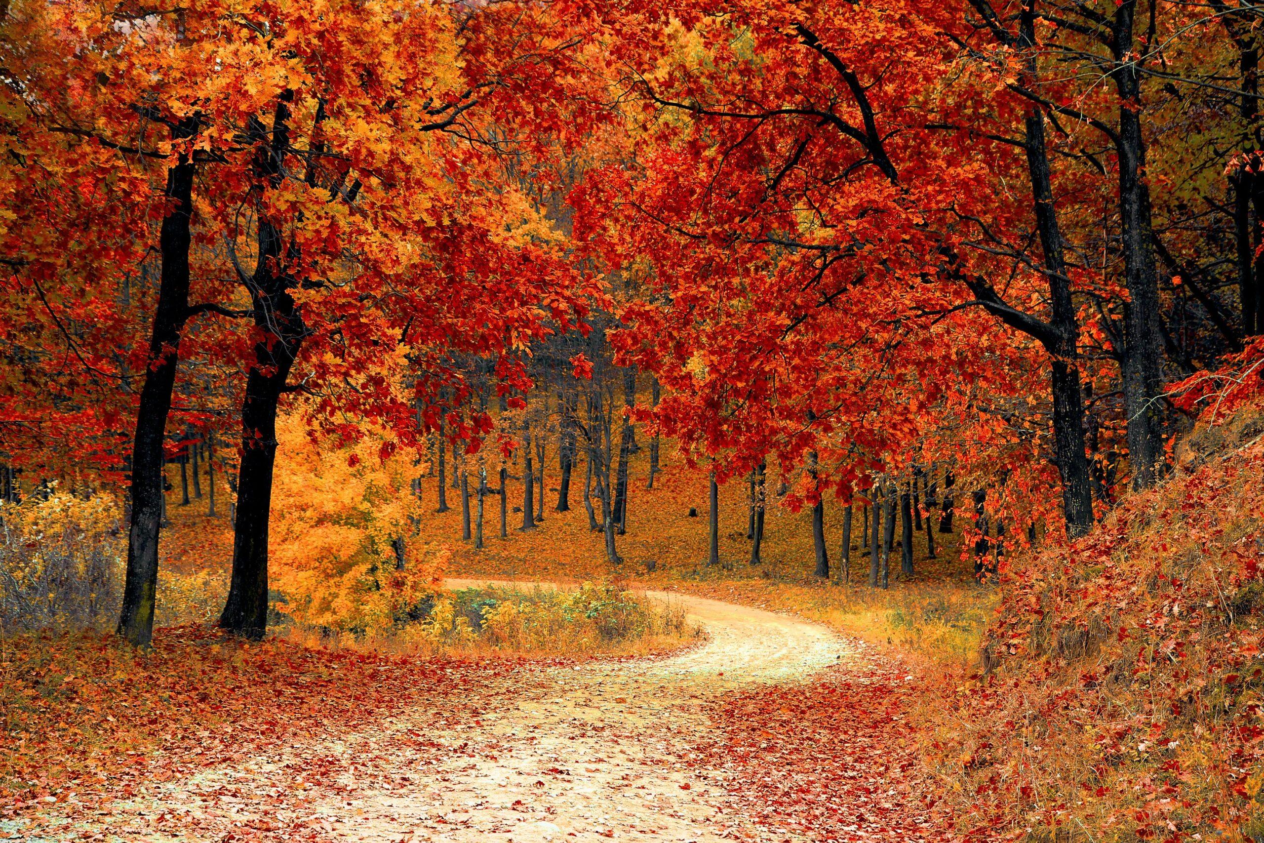 Kolory jesieni w parku